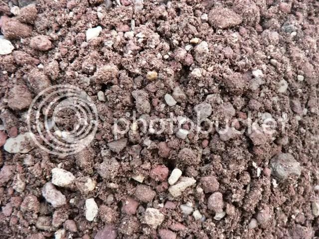 E' buona norma sterilizzare il terriccio usato per la semina o immergerlo in acqua con stimolante 66F e fungicida Previcur in forma liquida.