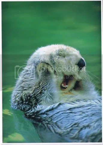 loutre qui joue Pictures, Images and Photos