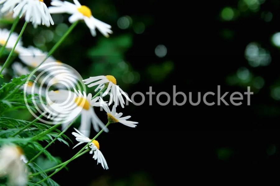 photo IMG_2326.jpg