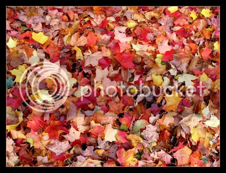 pile of leaves photo: Autumn leaves pile-of-leaves.jpg