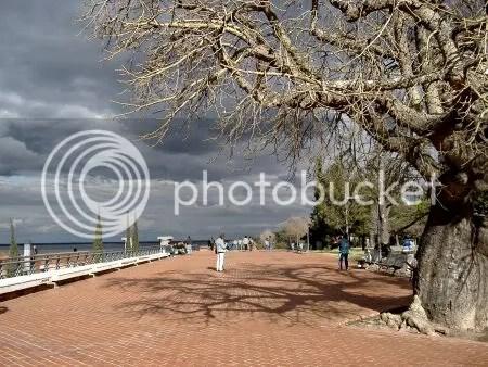 Invierno interminable. Foto tomada en el Parque de España, Rosario, Argentina.