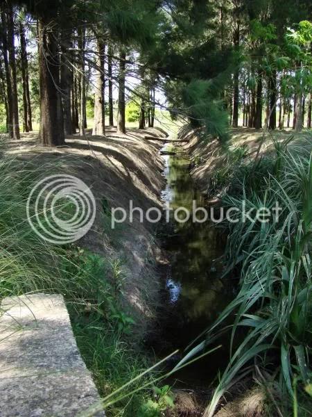 Bosque de los Constituyentes - Canal