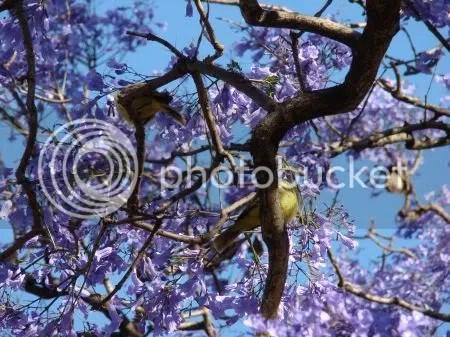 Pájaritos refugiados entre las ramas
