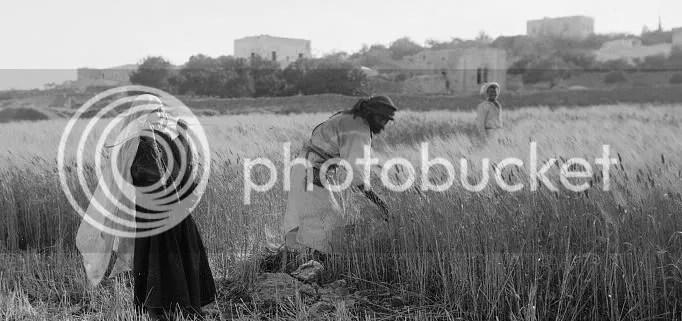 Ruth in Field