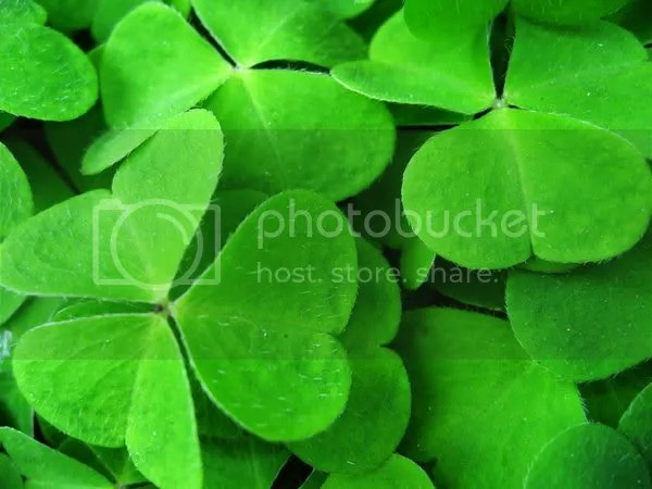 clover Pictures, Images and Photos