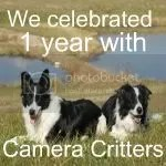 Camera Critters 1st Anniversary