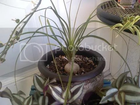 chloe sims ponytail palm