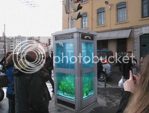 Acuario en cabina telefonica