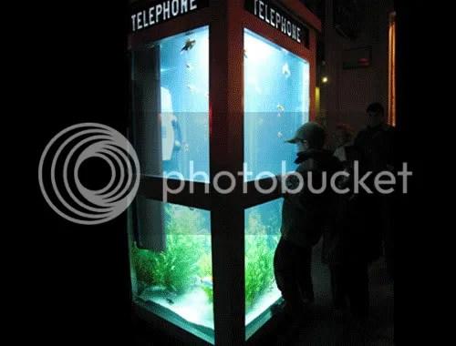 Acuario en cabina telefonica de noche