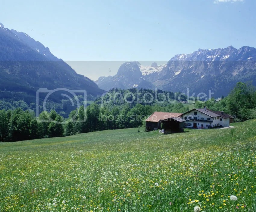 Austria Alpine Meadow Pictures, Images and Photos