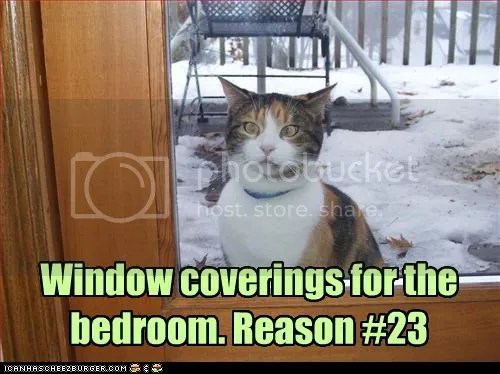 photo funny-pictures-cat-wants-curtains-f.jpg