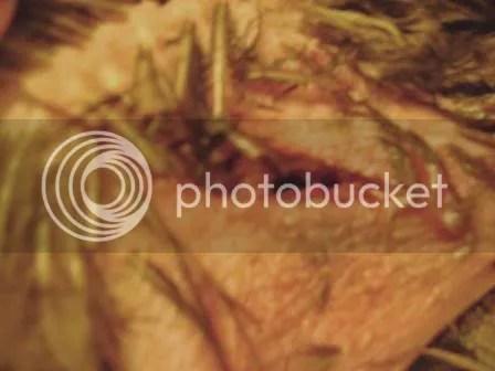 https://i2.wp.com/i187.photobucket.com/albums/x204/chicklady/crop3.jpg