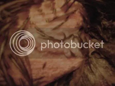 https://i2.wp.com/i187.photobucket.com/albums/x204/chicklady/crop4.jpg