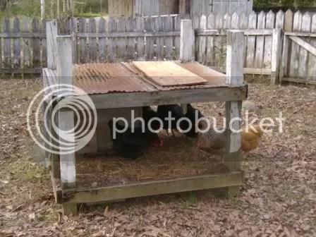 https://i2.wp.com/i187.photobucket.com/albums/x204/chicklady/shelter.jpg