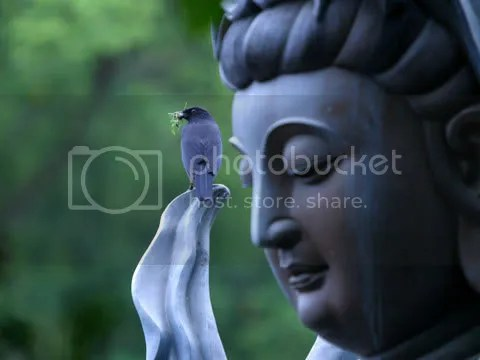 Blue Buddha and blue bird
