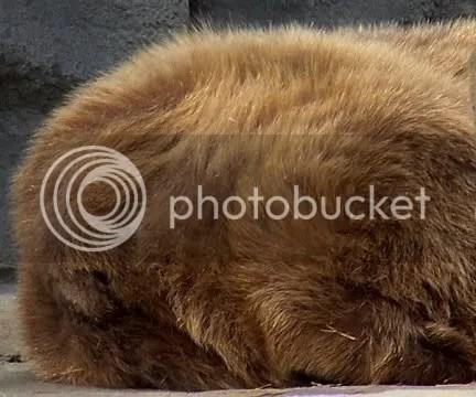 Bear Stern