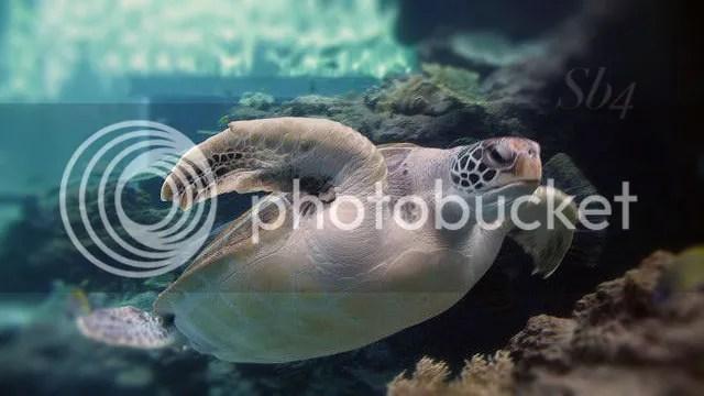 photo Turtle WM_zpsiet56ynp.jpg