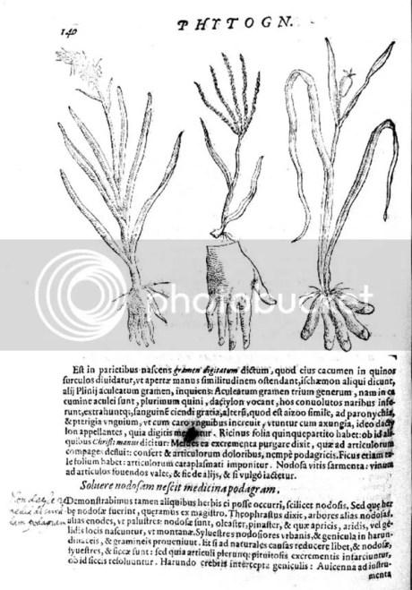 Della Porta,De Humana Physiognomia