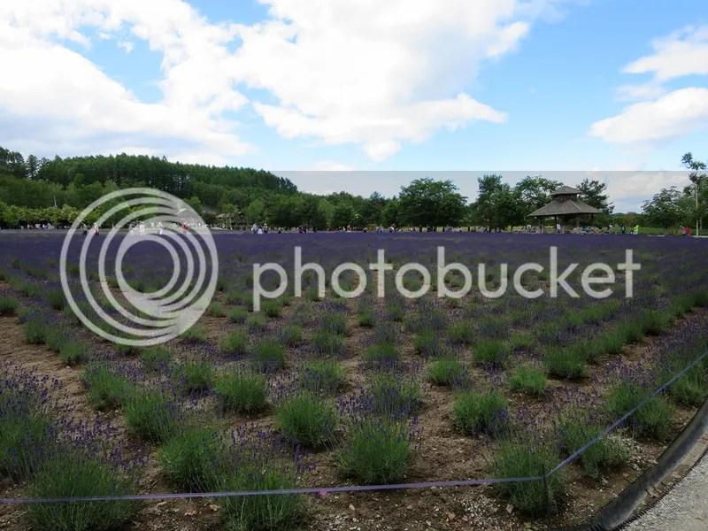 Biei lavender farm