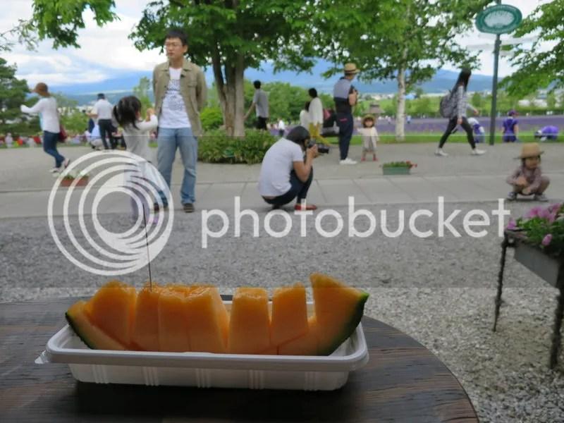 Biei Hokkaido Melon