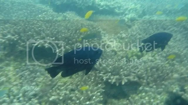 DOS PALMAS_underwater 1