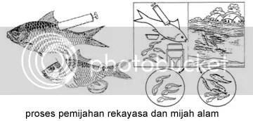 Download 48 Gambar Sistem Reproduksi Ikan Mas Terbaru