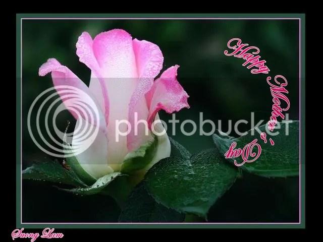 https://i2.wp.com/i195.photobucket.com/albums/z149/minh40/Ngay%20Cua%20Cha%20va%20Me/HappyMothersDayhoahong.jpg