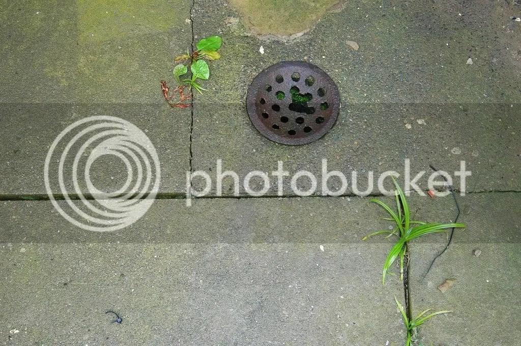 A Block Victorian drain cover