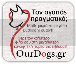 OurDogs Forums