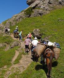 Muleteers of the Sierras de Tejeda, Almijara y Alhama