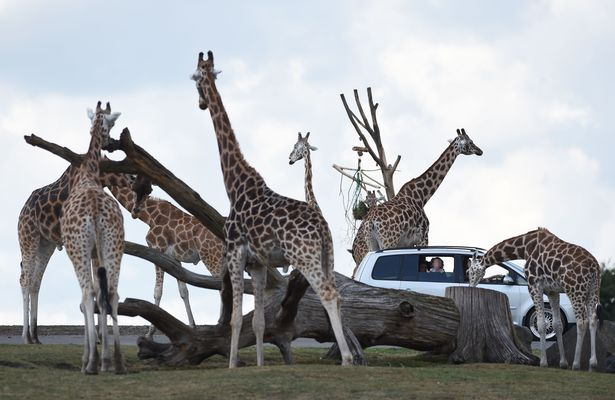 West Midland Safari Park is set to reopen on April 12