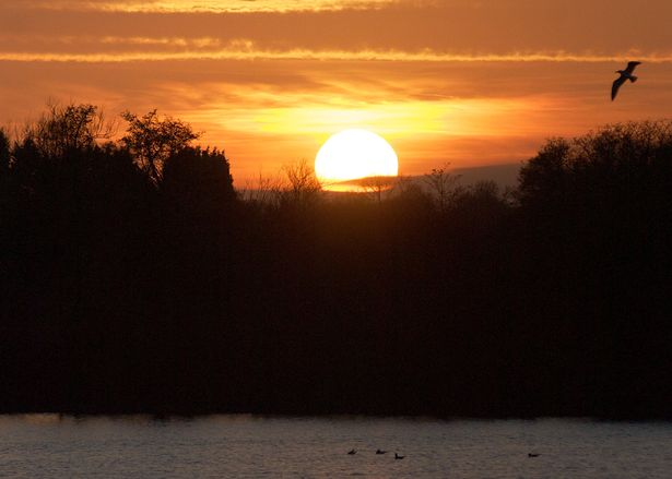 Sunset bird at Earlswood Lakes