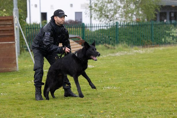 Police dog handlers with one of the German Shepherds used by the force (Image: Frankie Mills)