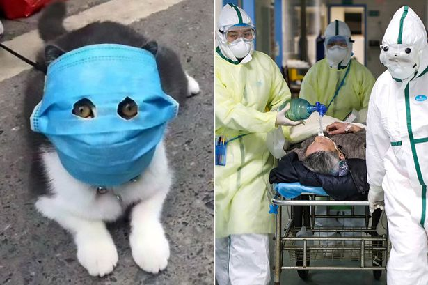 Image result for Hundreds of animals mysteriously drop dead in China