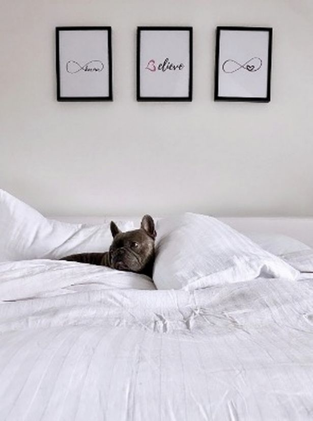 A big fan of minimalism, Herbie the French Bulldog loves being wrapped up in a freshly washed white duvet.