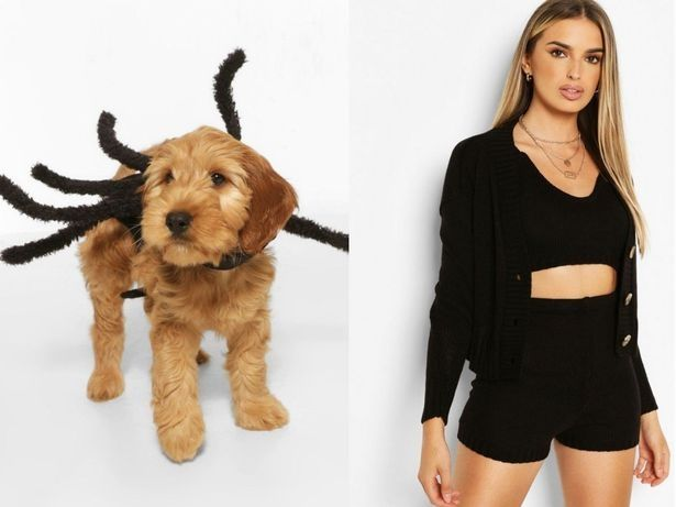 Model and dog wear spider Halloween costumes