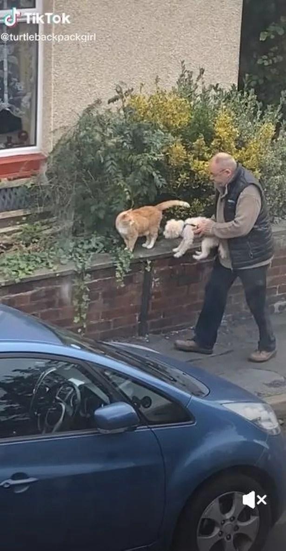 Man picking up dog