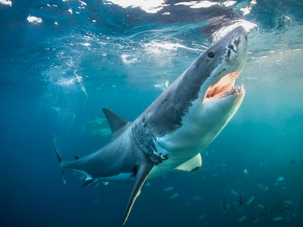 There have been several reports of deadly sharks in the vicinity of British waters in recent years