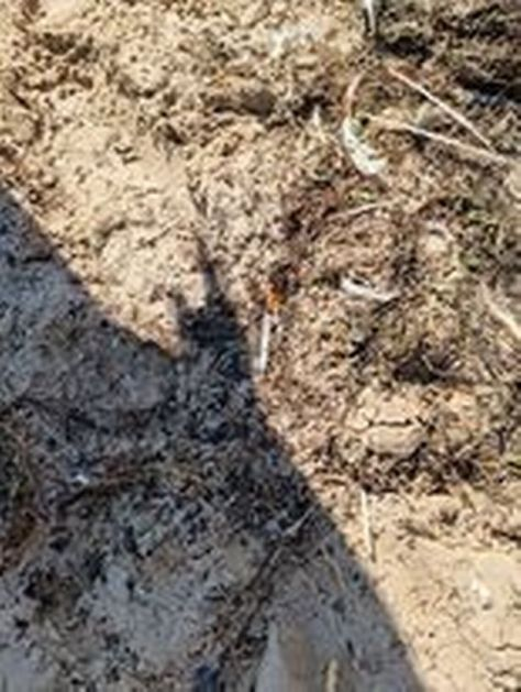 Needles found along sand in between Blackpool Beach and Lytham St Anne's