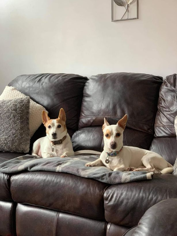 Mello now has a permanent home with Julie and Simon, but Doggers 4 Rescue is always on the lookout for new adopters in the Greater Manchester area.