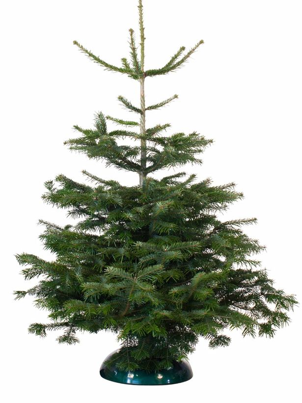 Cheap Christmas Decoration Ideas Where To Buy Budget Christmas Tree Decorations To Make Your Home Festive For 2017 Mirror Online