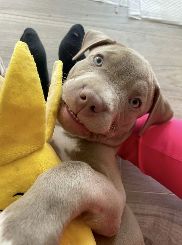 Nine-week-old is back with his owners