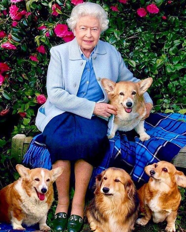 Queen surrounded by dogs
