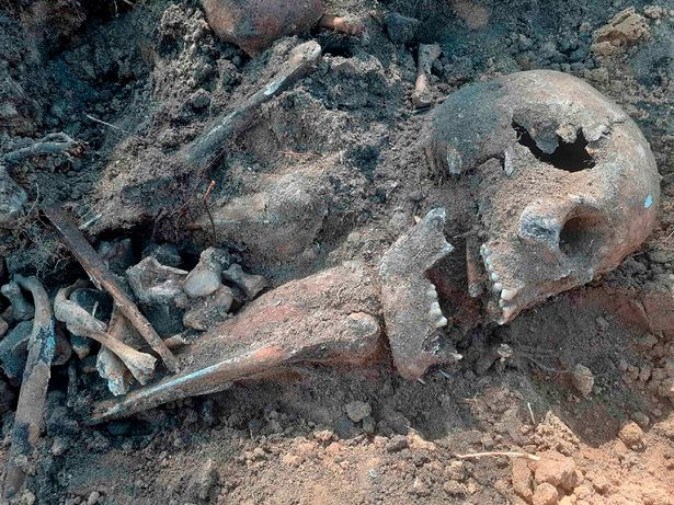 Volunteers found bones in 15 pits at the site