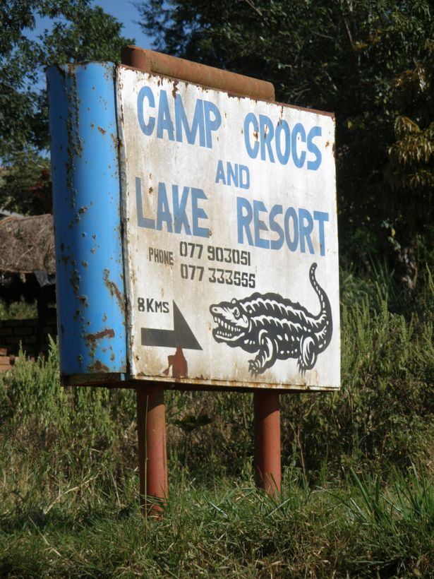 Osama has now been given to the owners of Uganda Crocs to be used in their breeding programme