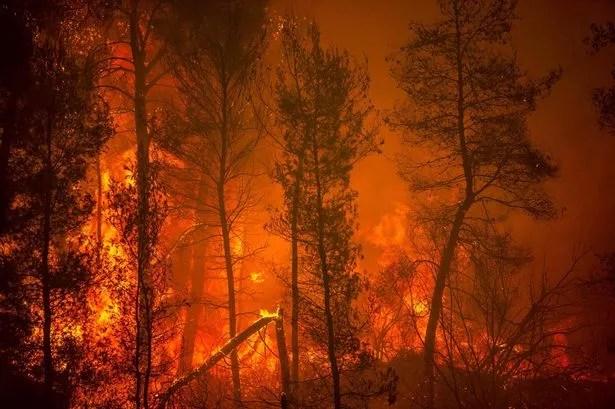 A blaze engulfs trees in its path