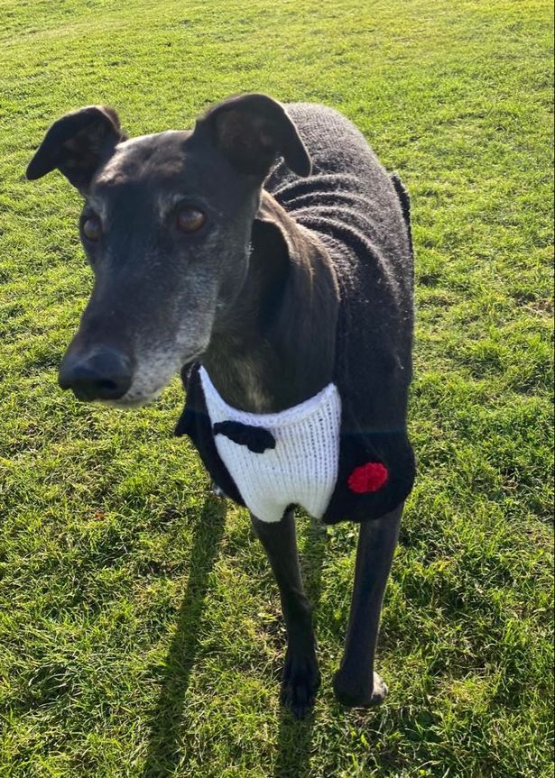 A pooch modelling some knitwear at Marston Gables