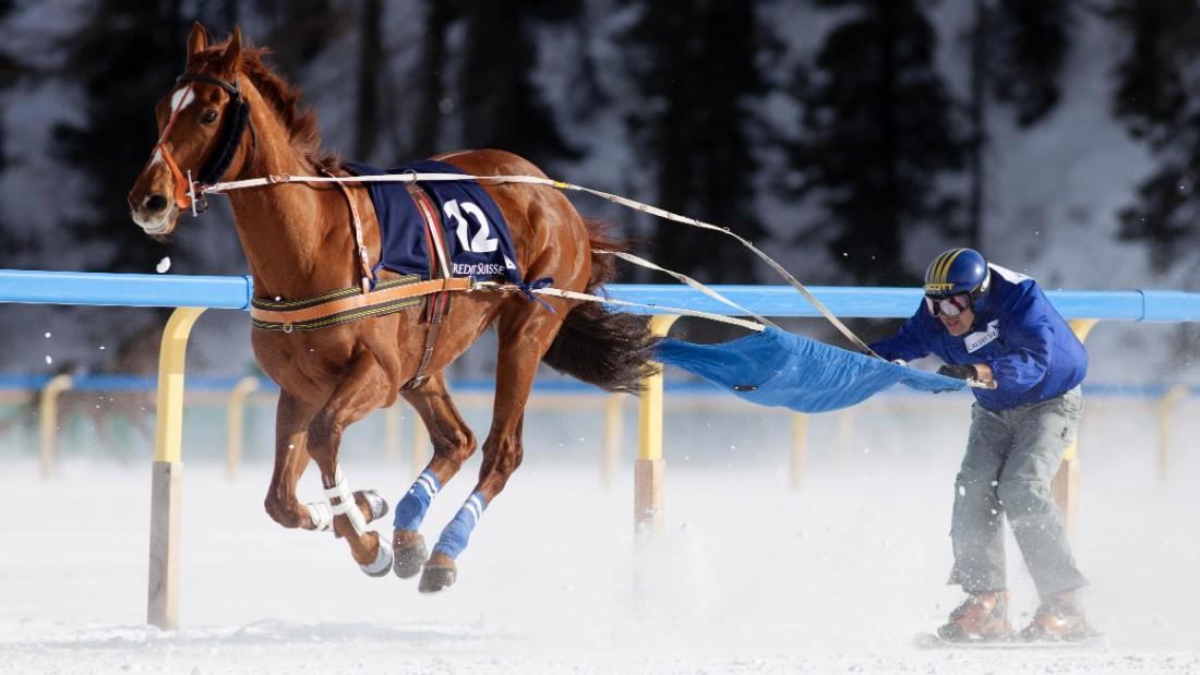 Image result for skijoring images
