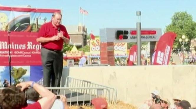 Iowa State Fair Sheep