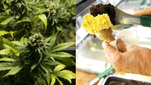 Can cannabis gelato change Italy's attitude to weed?